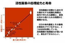 活性酸素の処理能力と寿命